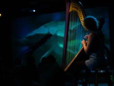 AB_harp